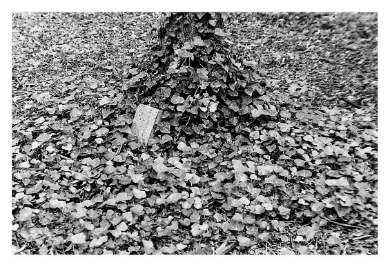 ladrillo entre hojas