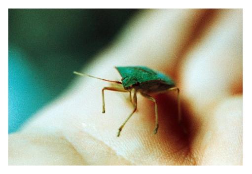 Insecto fake