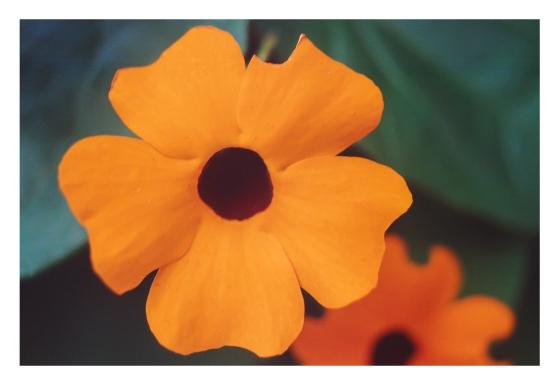 Naturaleza Flor naranja