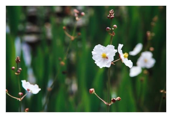 Naturaleza flor