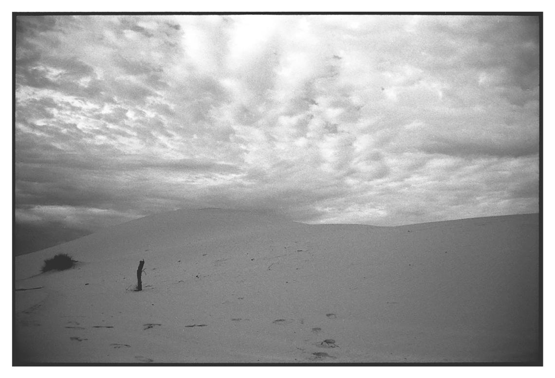 Rubs Desierto